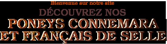 Poneys Connemara et Français de Selle