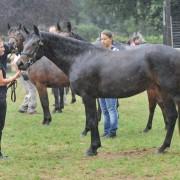 natconn12-1072-abba-oak-femelle-2-ans